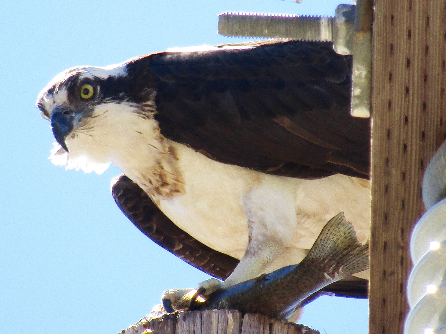 Get a birds eye view of the best in Boise County!